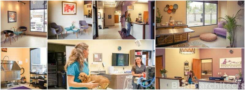 Creative Interior Design  Vet Clinics And Hospital Construction   Office